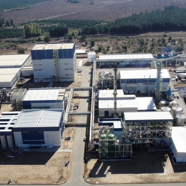 Inuline Sugar Chicory processing plant-1